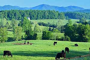 Cattle Farms for Sale in Charlottesville