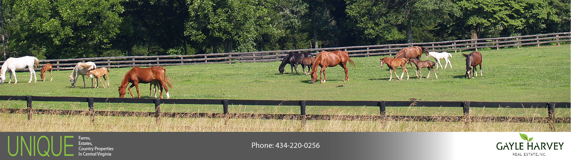 Charlottesville Virginia Horse Farms for Sale